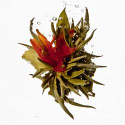 Blütenmärchen - Bloomingtea - Teeblume aus China