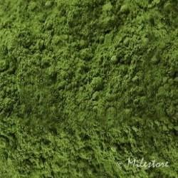 Japan Matcha - Grüner Tee