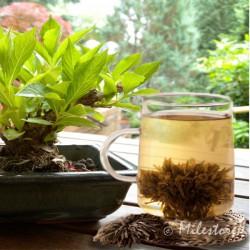 China Mu Dan Teerose - Grüner Tee - Bloomingtea