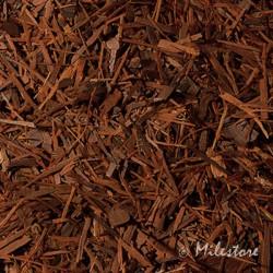Lapacho - Südamerika - Tecoma-Lapacho Baum
